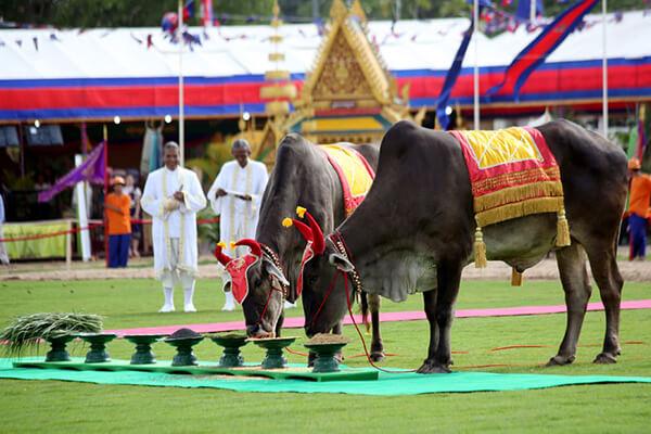 Cambodia Festivals in May