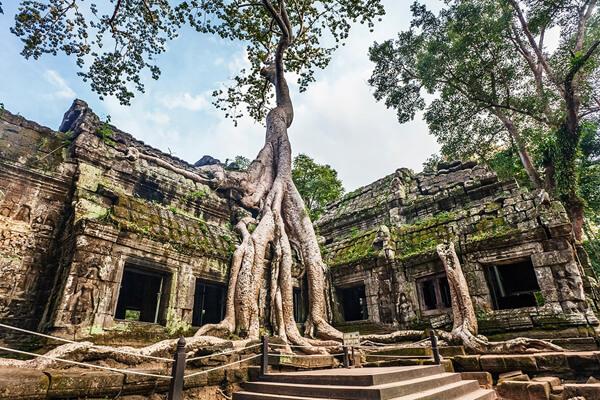 Ta Prohm , Cambodia Trips