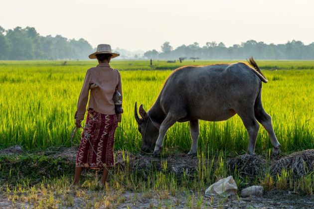 a daily life in cambodia