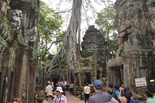 Discover the ruin of Ta Prohm Temple