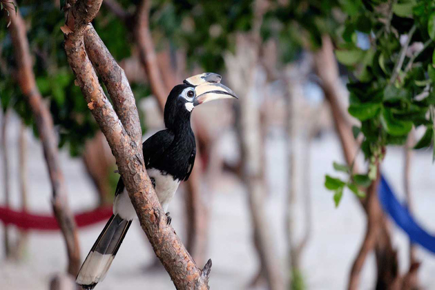 Wildlife on Koh Rong Samloem cambodia tours