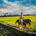 rice paddy, Cambodia Tours
