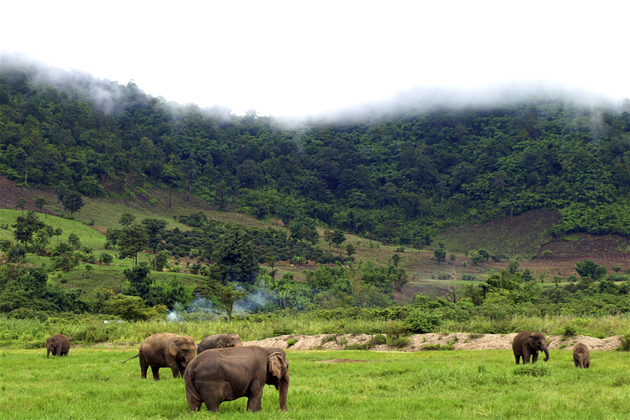 Get Close to the Wildlife in Mondulkiri