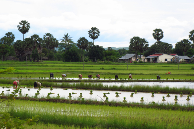 kampot countryside