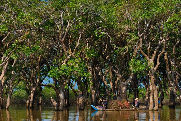 tonle sap lake ecosystem
