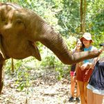 Mondulkiri elephants, Cambodia adventure tours