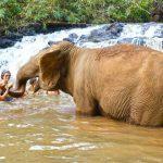 Washing elephant, Cambodia trips