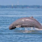 Dolphin watch, Adventure tours in Cambodia