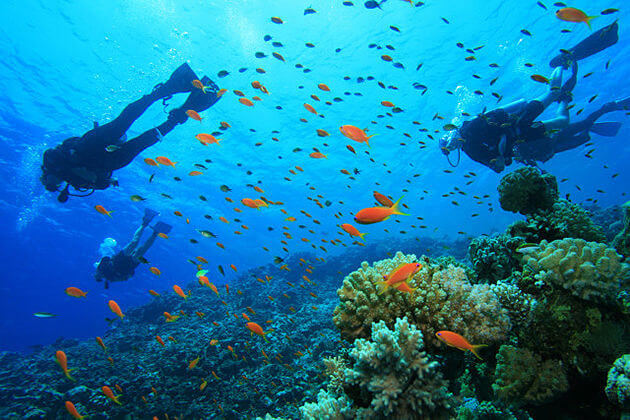 Diving Sihanoukville, Cambodia trips