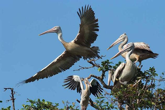 Prek Toal Bird Sanctuary cambodia cuisine tour