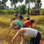 rice planting in Cambodia family vacation