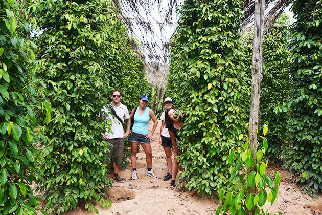 Kampot Pepper, Cambodia travel vacation