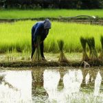 become khmer farmers, Honeymoon tours to Cambodia