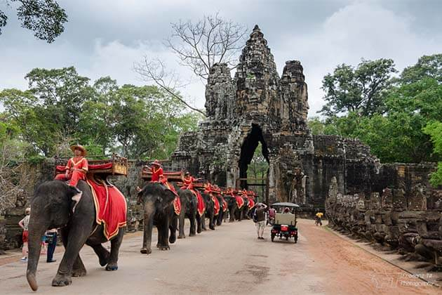 Cambodia will Stop Elephant Rides at Angkor Wat in 2020