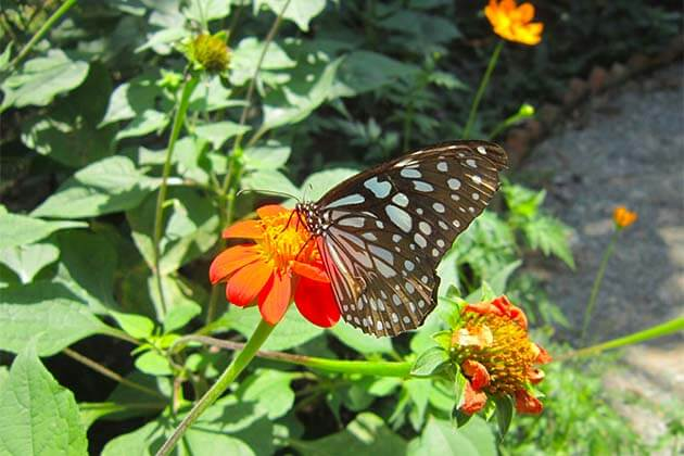 Kep Butterfly Farm, Local tours in Cambodia