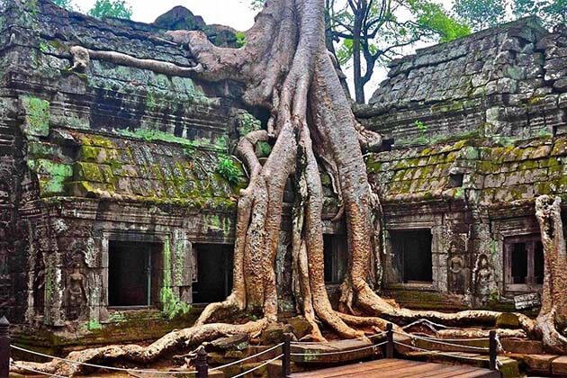 Ta Prohm Temple, Cambodia family trips