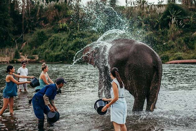 Swim with elephants, Cambodia adventure tour package