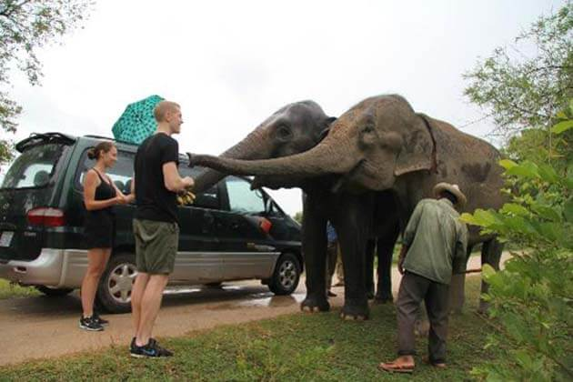 Visitors feeding the elephants in Phnom Tamao Wildlife Rescue Center, Cambodia adventure tour