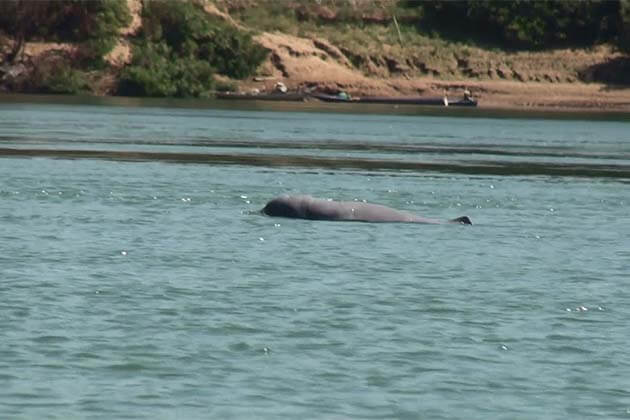 Watch Dolphins at Kratie, Adventure Tours in Cambodia