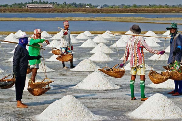 Kampot Salt Fields, Cambodia Tour Itinerary